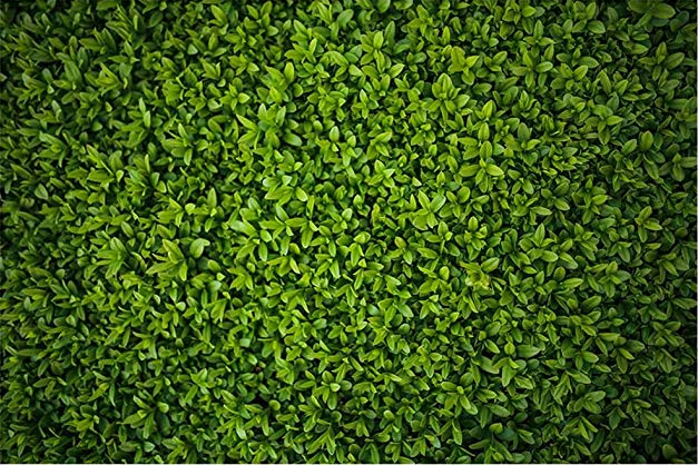 Fabric Green Leaves Backdrop (not real leaves but look that way)